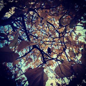Autumn - Ormeau Road